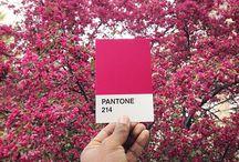 panton 214 with 684