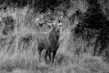 ST HUBERTUS HUNTING TOURS / WE HAVE THE WIDEST HUNTING OFFER IN THE CZECH REPUBLIC AND SLOVAKIS