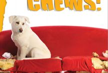 The Terrible Chews: Tips for managing your pet's appetite for destruction