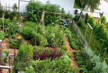 Kitchen Gardens that make me smile
