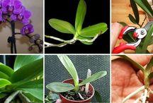 astuce orchidées