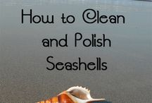 How to clean shells