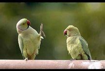 Funny Parrot Talking Videos