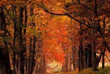 season autumn 가을 / autumn 가을