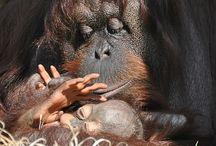 Palm oil free life