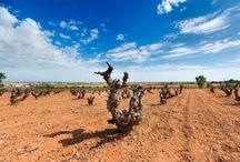 Medio Ambiente y Sostenibilidad / D.O. Vino de Uclés es la primera denominación que calcula la huella de carbono de sus vinos ¿Quieres saber más?