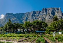 food markets in South Africa