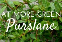 Leafy Greens Container Garden Course / Get a taste of the comprehensive online course with these pins about leafy greens container gardens!