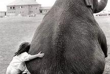 Animals / by Carlo Cavandoli