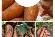Growing fruit and veg