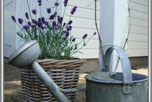 tuin / inspiratie landelijke tuin