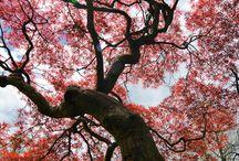 Albero fiorito di Primavera.