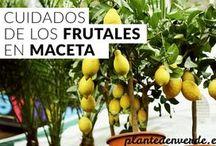 Frutales en maceta