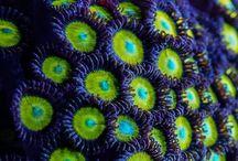 Océanos, corales, peces