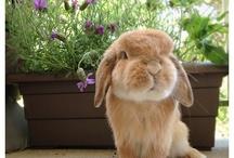 Cute bunny's