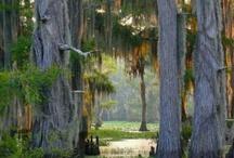 The South / by Linda Jones