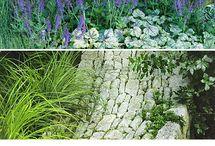 Giardino / Piante da giardino