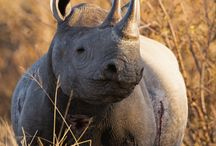 Exotische Tiere / Egal ob Nasenbär, Riesenschildkröte oder Zwerggiraffe, unsere Community freut sich über jeden Tierliebhaber <3 http://www.die-tier-welt.com/forum