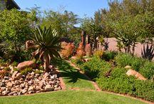 African Landscape / Landscapes in Johannesburg