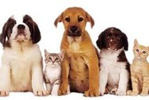 Pets / Get Special Discount On Pets Supplies Products,