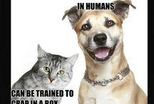 Love me some dogs :) / by Jennifer Hockenberry