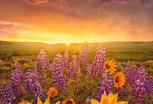 Les fleurs donnent sur le monde