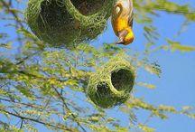 O passarinho esta fazendo ninho