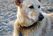 Take your Pooch on Holiday  / We have an amazing selection of dog friendly holiday cottages so you can bring your perfect pooch along too