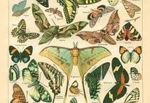 Butterflies / by Jacqueline Davidson