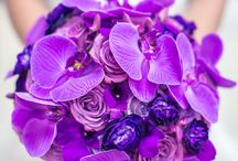 PURPLE / Dreamy. Regal. Purple is just plain cool. In Western culture, PURPLE symbolizes: Authority, Fame, Military Honor (Purple Heart), Royalty, Spirituality Wealth.