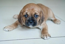 Next doggie
