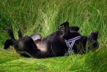 Nature Walks on June / People that has a dog know how happy it can be during a nature walk! Chi ha un cane sà quanta gioia possa sprigionare il nostro amico a 4 zampe se gli si regala l'occasione di una bella passeggiata senza guinzaglio (off leash) in un luogo pieno di odori, pace, libertà e bellezza
