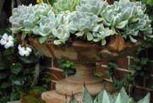 Succulents / by Lori Berlie