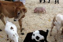 Petting Zoo!!