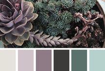 colors for LICSI