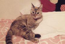 I am Jazzy the cat / My cat princess
