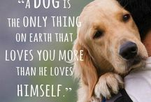 Words to live by / Favorite quotes about our furry best friends