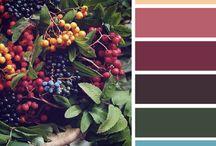 Color/ PALETY FARIEB