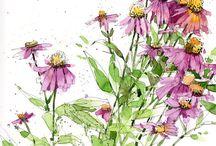 Sketching Ideas - Botanicals