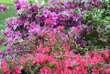 AMAZING PLANTS!