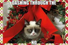 Grumpy Cat Christmas Memes / Our favourite Grumpy Cat looks at the festive season and gives her thoughts on this time of the year... Christmas