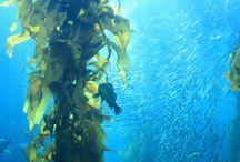 Seaweed / Recipes, nutritional information, novel uses, medicinal and beauty
