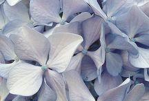 Flowers n more