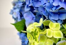Blooming Beauties / Our favourite plants and gardening tips...