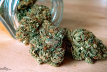 Cannabis Knowledge Base