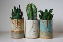 Succulents / by Janna Webbon