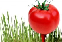 RE Tomato Blogging Help / by Simplistic Realty
