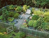 garden / by Courtney Paris