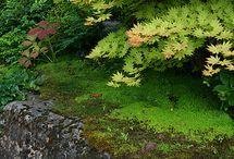 Suddenly Autumn / Autumn in the Northeast