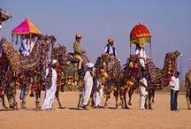 Voyage au Rajasthan : Le Rajasthan déclare le dromadaire « animal d'Etat »